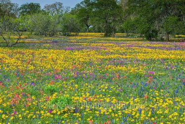 heaven wildflower brian clark